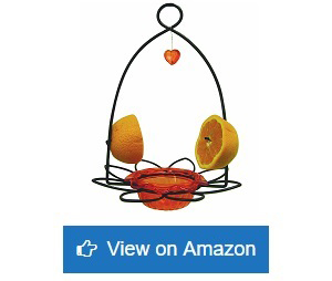 Birds-Choice-Flower-Oriole-Bird-Feeder