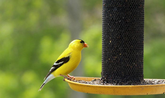 best finch feeder