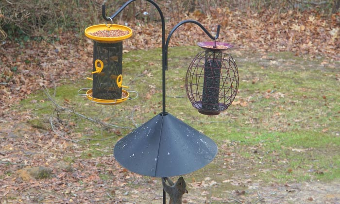 best-squirrel-proof-bird-feeder-pole