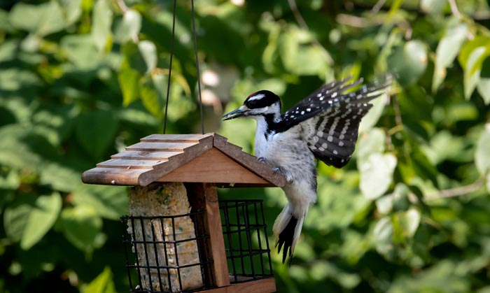 squirrel-proof-woodpecker-feeder