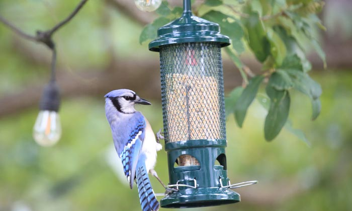 bird-feeders-for-cardinals-and-bluejays