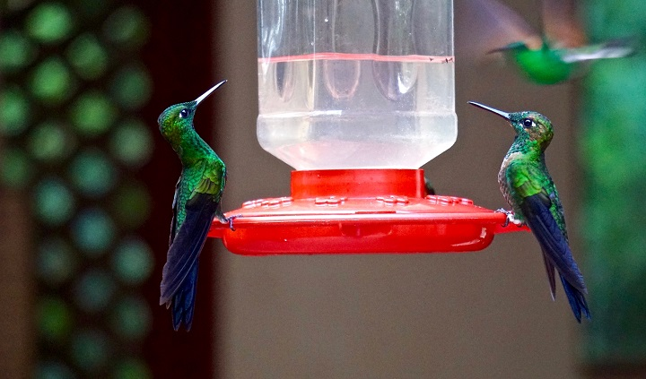 Best-Hummingbird-Feeder