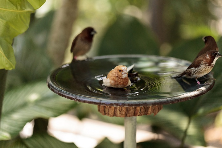 best-bird-bath