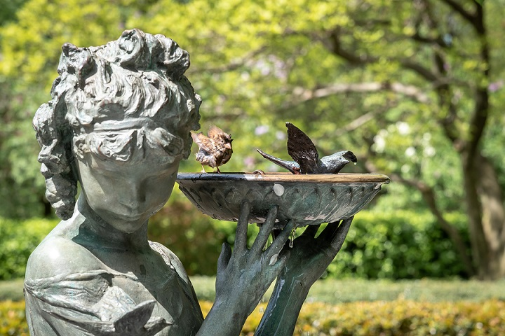 bird-bath-buying-guide