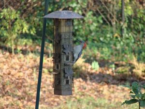 where to hang bird feeder