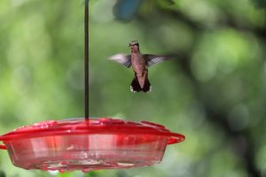 starling proof bird feeders