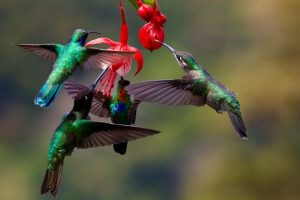 what colors attract hummingbirds