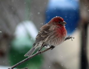 How to choose finch feeder