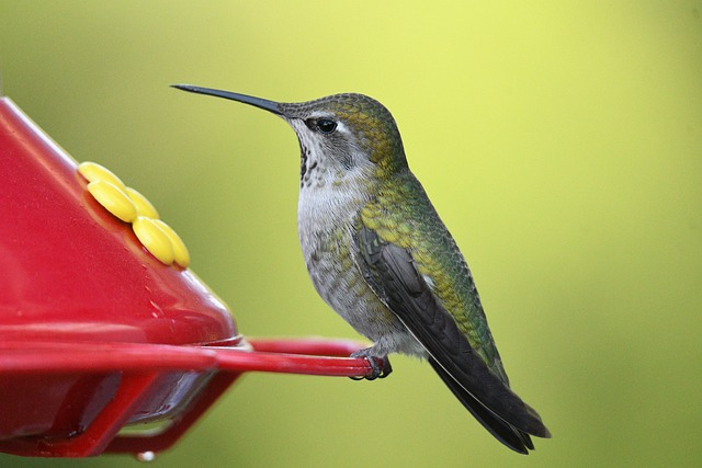 how to keep ants out of a hummingbird feeder
