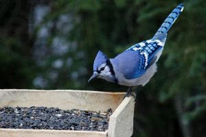 best place to buy bird seed