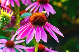 what are the best flowers for honey bees