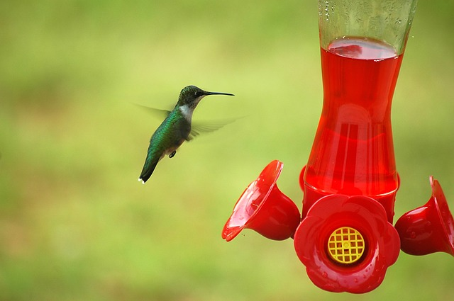 perky pet hummingbird feeder