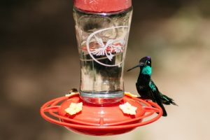 how many types of hummingbirds are there